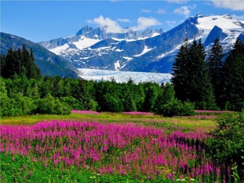 Top 10 Things to Do in Alaska in Summer